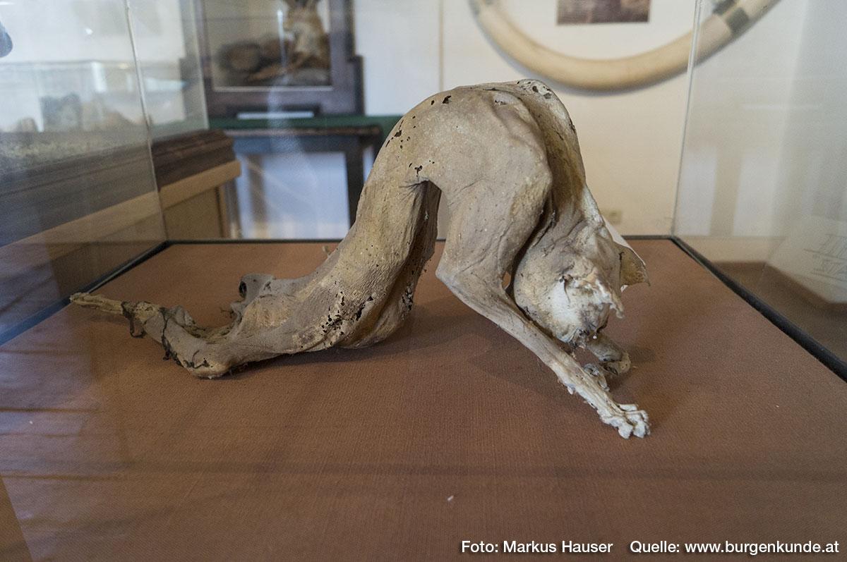"""Ein ganz besonderes Kuriosum ist zweifelsohne die """"luftgselchte Katz"""". Vor vielen Jahren verirrte sich eine Katze auf den Dachboden und kam nicht mehr heraus. Man fand sie später, über einen Dachträgerbalken hängend, im mumifizierten Zustand wieder."""