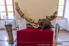 Ganz besonders stolz ist man in Mauthausen auf die zwei hier gefundenen Mammut-Stoßzähne, von denen einer im Heimatmuseum dauerhaft ausgestellt ist. Daneben steht ein Schnekenknochen eines Mammuts.